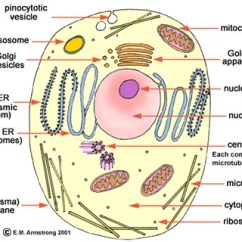 A Well Labelled Diagram Of Microscope 1966 Mustang Radio Wiring Prokaryotic Cell | Biochemical Minds