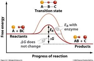 enzymes | Biochemistry3rst