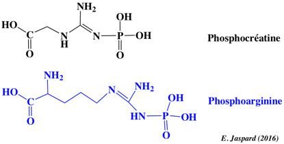 Reversibilite equilibre reaction biochimique equilibrium biochemical adenosine triphosphate NAD NADP free enthalpy energy energie libre Gibbs coenzyme phosphocreatine phosphoarginine biochimej