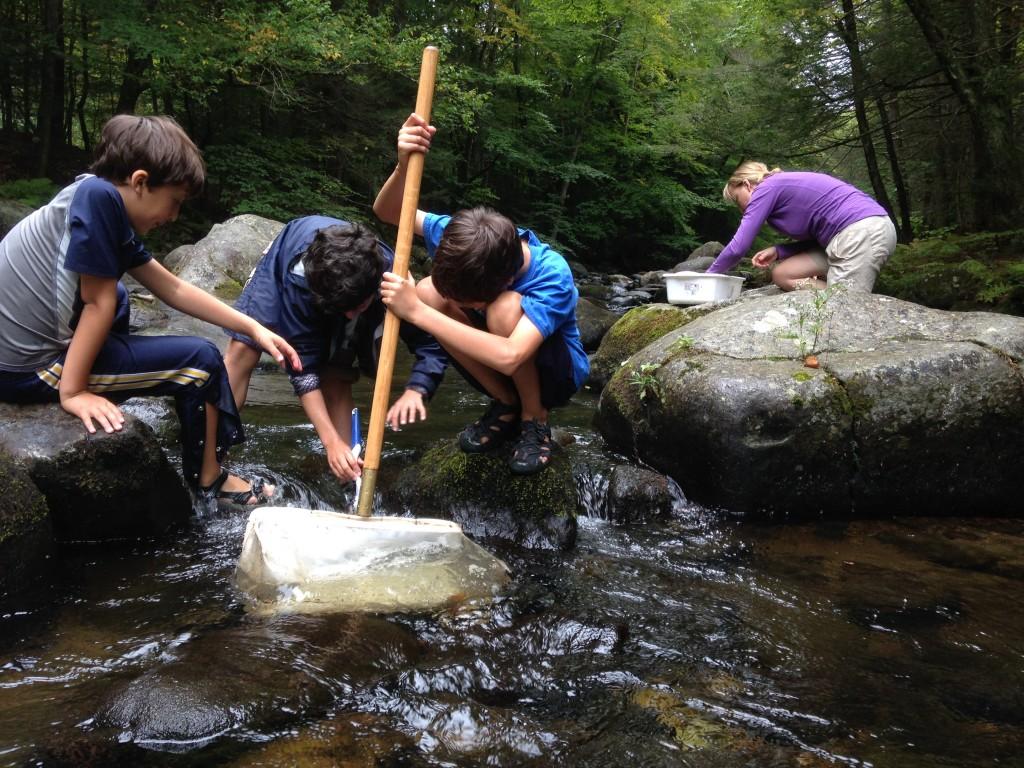 capture at Dead Branch Brook