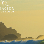Biocitizen Now Voyagers team with the Fundacion Punta de Lobos and the City of Pichilemu!