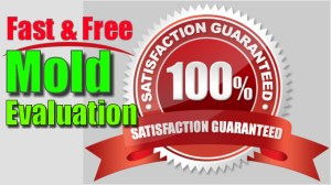 Mold removal st louis missouri