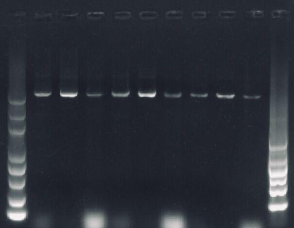 soil_genome_bands.jpg