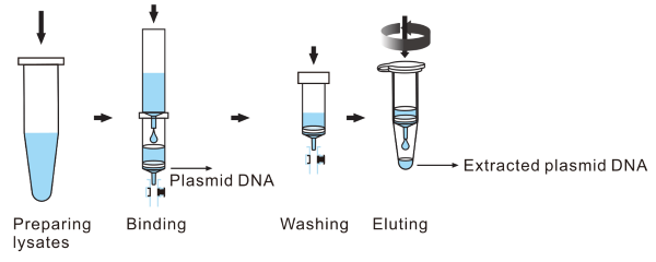large_scale_plasmid_miniprep_columns_workflow