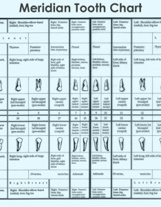 Where the meridian tooth chart comes from also rh biocompatibledentist