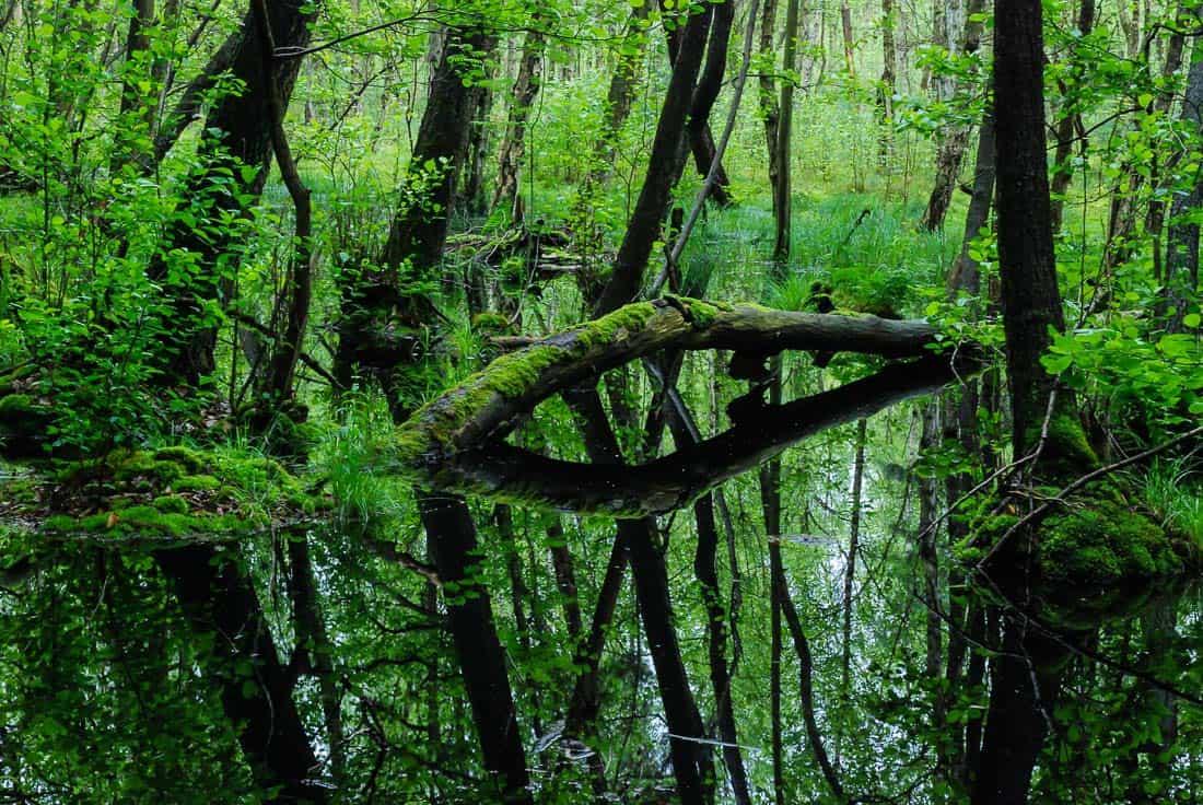 EWS - Biosphere Reserve Schorfheide Wilderness -00409_