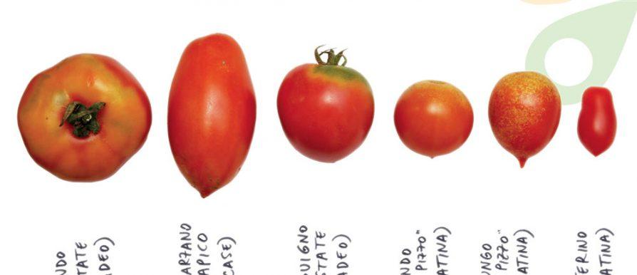 Colture a confronto antiche variet di pomodoro