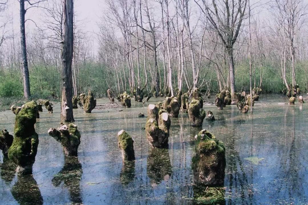 Terrée de Doix inondée au mois de mars dans le Marais poitevin