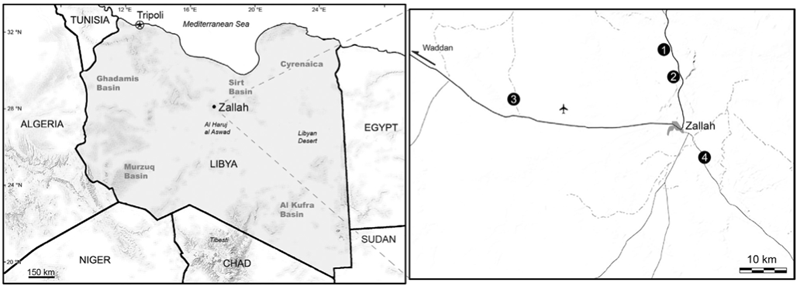New species of early anthropoid primate found amid Libyan
