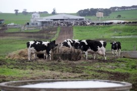 A classic Dairy Farm and its Landscape in Bega (Farm Weekly 2014)