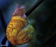 CoolSnail