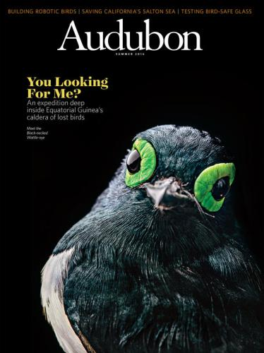 The cover of Audubon magazine's summer 2016 issue, featuring BI's expedition to Equatorial Guinea. Click on the photo to read the article!