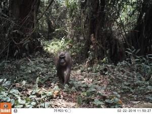Equatorial Guinea Mammals