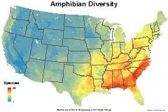 amphibians_usa_total_richness_thumb