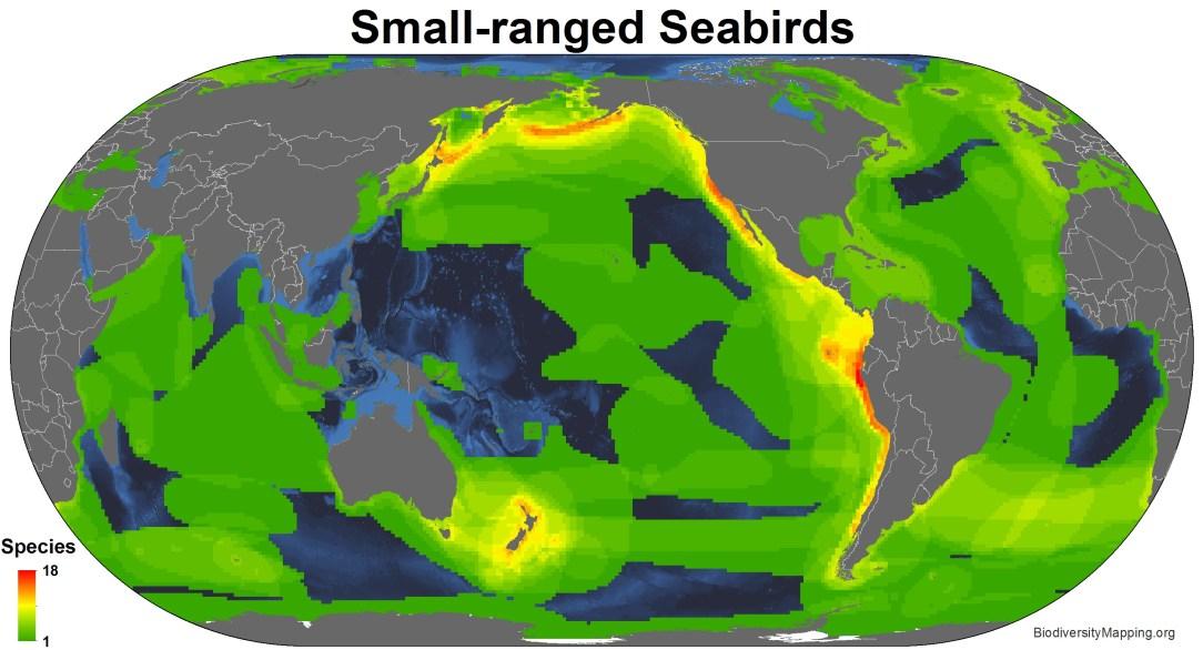 seabirds_small_ranged