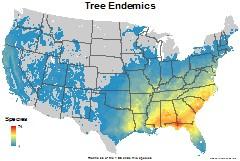 trees_usa_endemics_thumb