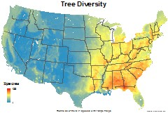 trees_usa_total_richness_thumb