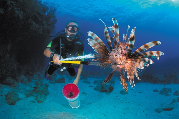 Spear fisher with a lionfish caught on the end of a spear underwater