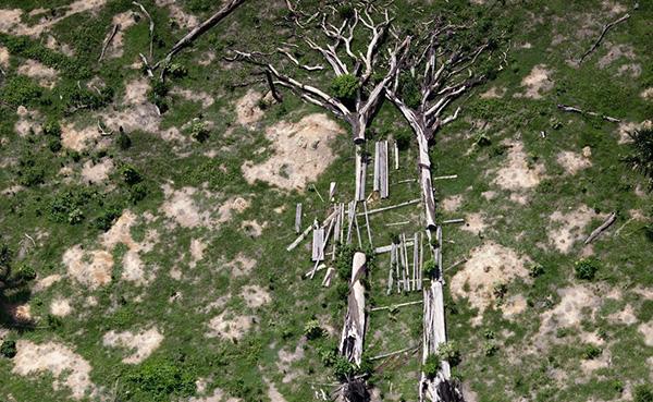 biodiversity photo trees rainforest deforestation novo progresso brazil
