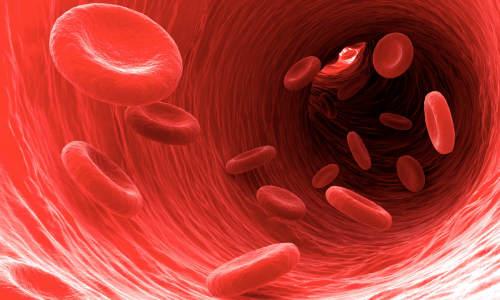 Human platelets
