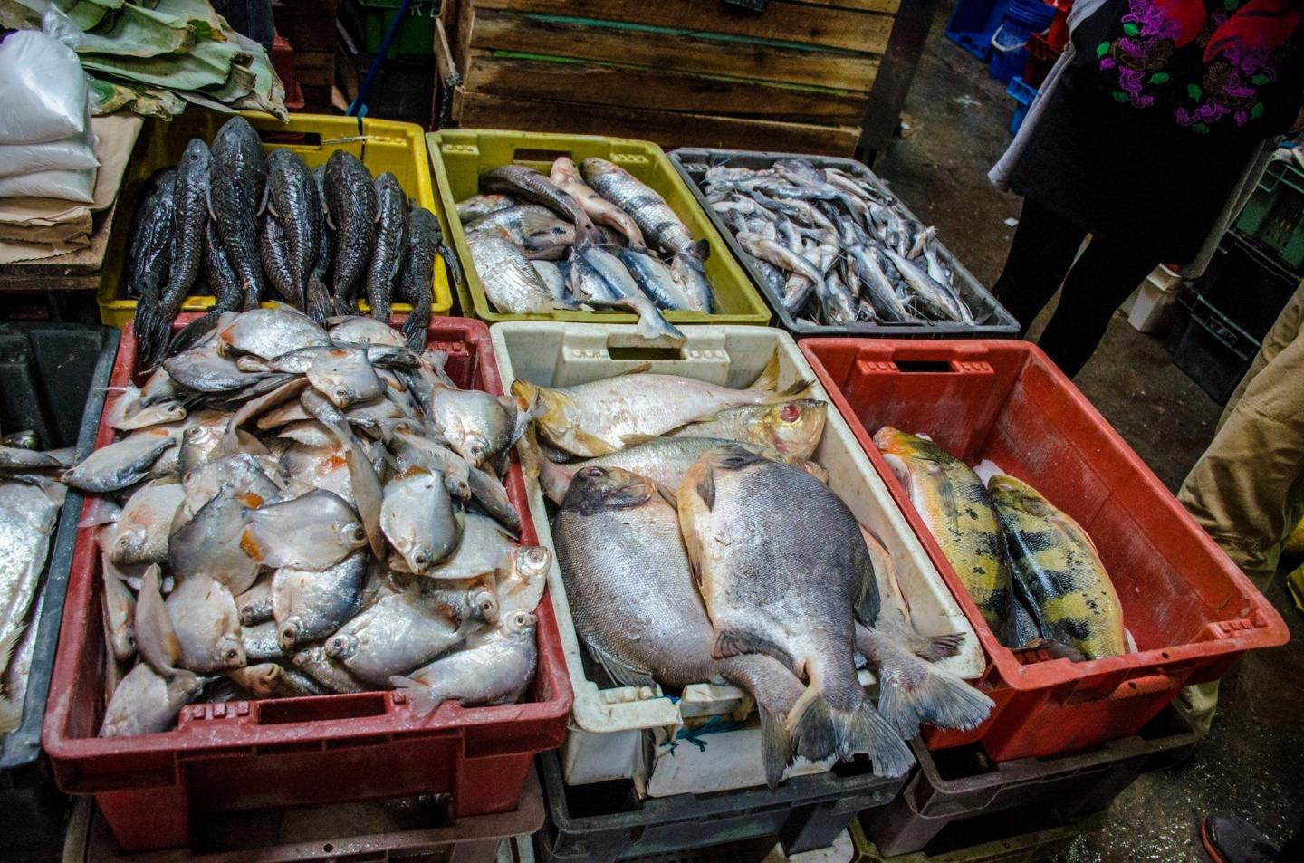 Aquatic biodiversity key to sustainable, nutrient-rich diets