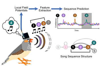 Predicting a bird's song from neural activity