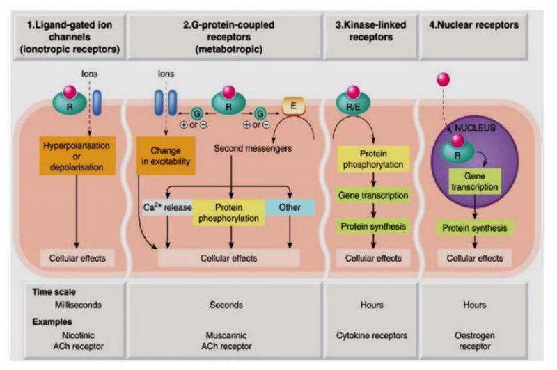 Reseptor dalam sistem biologi