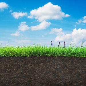 25790442 - grass and soil