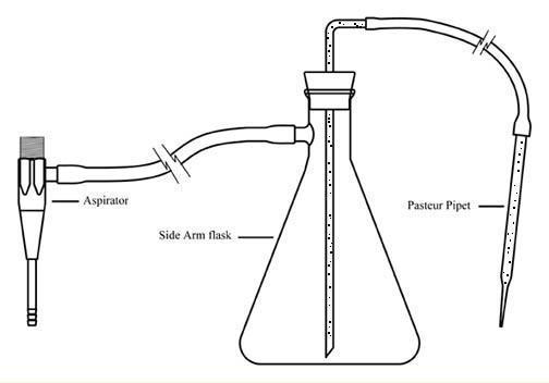 Colorimetric Measurement of Biofilm Density- Instructions