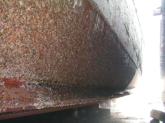 hull_fouling