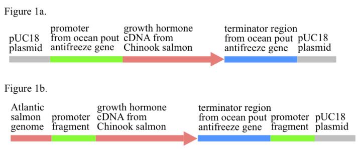 AquAdvantage salmon gene construct