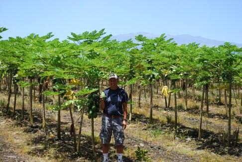 Dennis-papaya-mountain