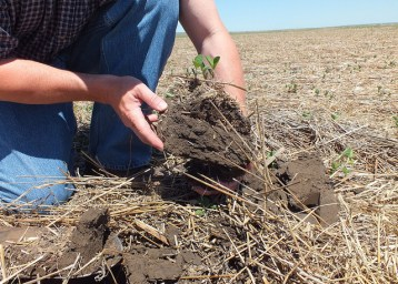 Soybean planted into wheat stubble. Image by Jason Miller, USDA-NRCS, via Flickr.