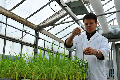 Plant breeding scientists like this one are featured in GENERA