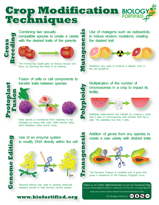 Crop Modification Techniques Infographic Biology