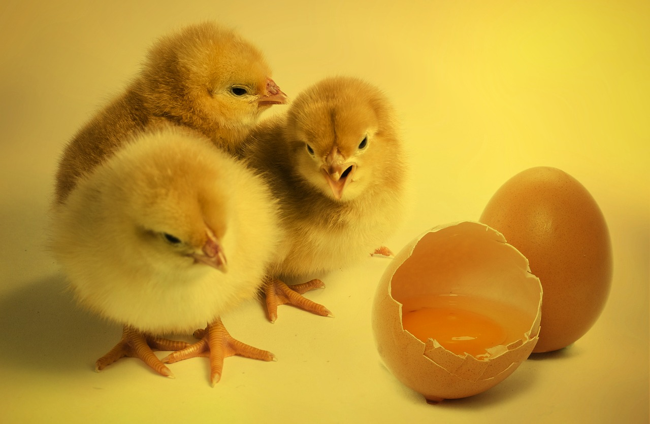 45f450045ab Sustainability, animal welfare, and Easter eggs - Biology Fortified Inc.
