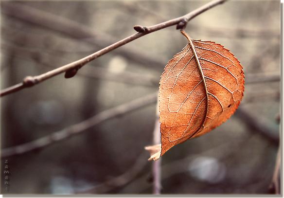 Winter's Last Leaf