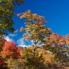 10 Eco-Friendly Steps to Add to Your Autumn 'To-Do' List