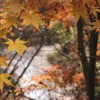 7 Biofriendly Ways to Celebrate Autumn
