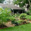 Want Organic Produce? Why Growing Your Own is the Best Option