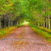 7 Biofriendly Actions to Help You Get on the Path to Sustainability