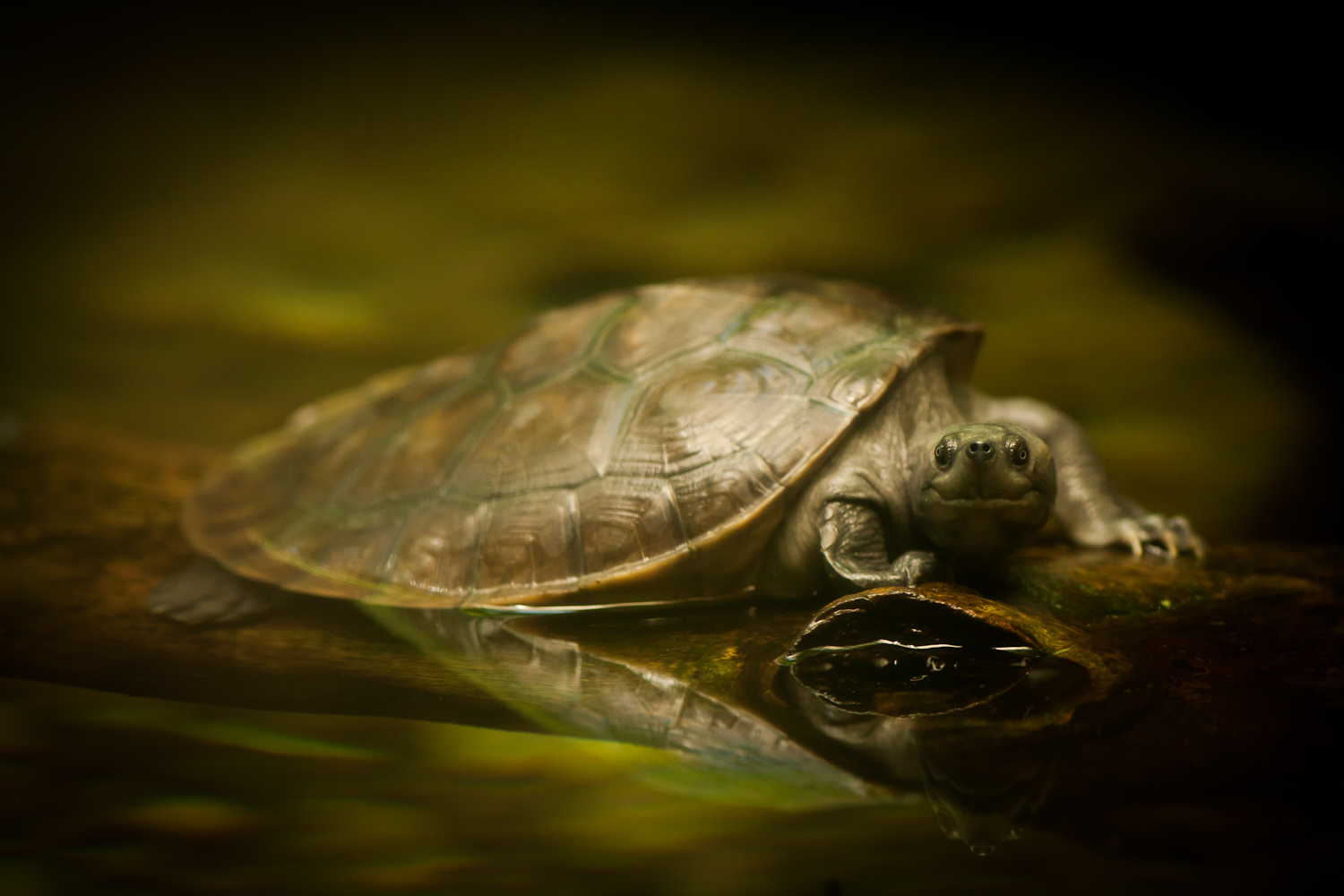 The Curious Turtle