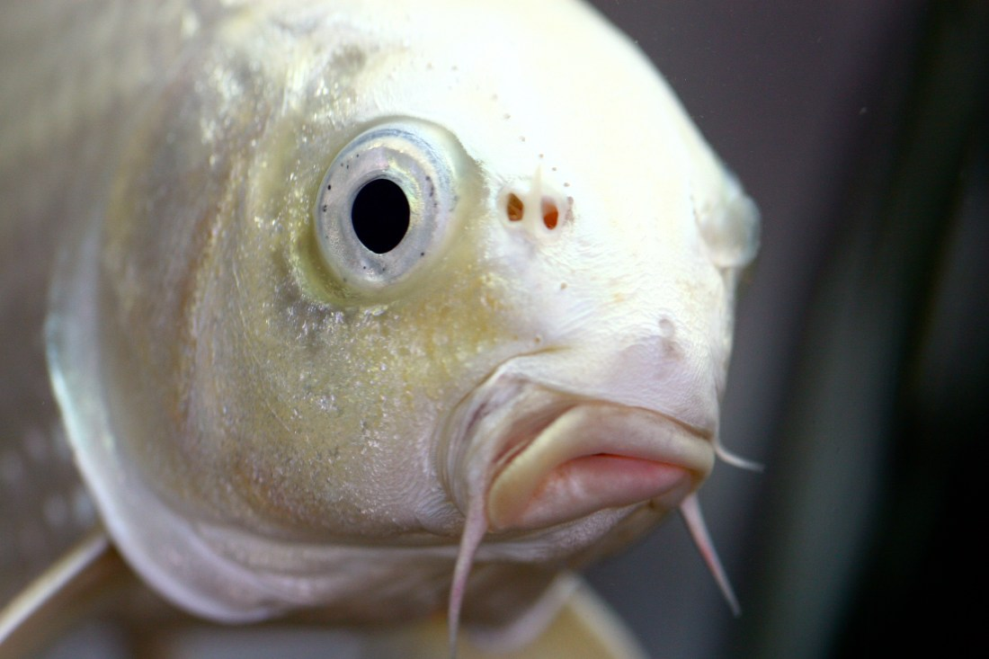What are you looking at fish