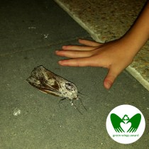 The Girl Who Put Her Hand Next to Mothra | Green Wings Award