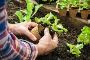 How to Make Gardening at Home More Eco-Friendly