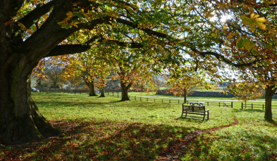 Arbor Day: 4 Reasons You Should Plant a Tree