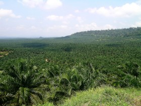 What is the Problem with Palm Oil? Why Should We Care?