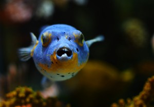 Don't Mess With This Fish