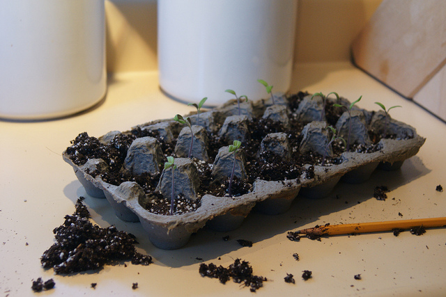 egg carton plants