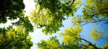 5 Environmentally-Friendly Benefits of Nurturing Trees in Your Yard